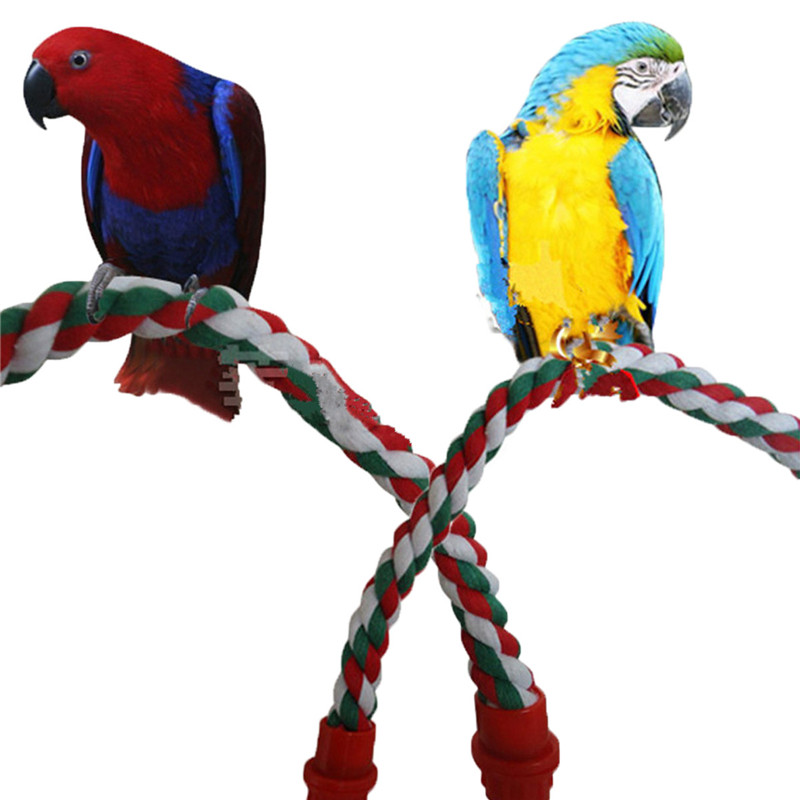 Wholesale Bird Toys : Online buy wholesale cockatiel parrot from china