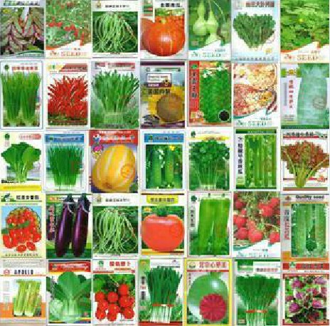 100pcs Vegetable seeds wholesale and different vegetable seed family potted balcony garden four seasons pl(China (Mainland))