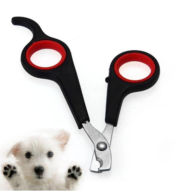 Уход за собакой из Китая