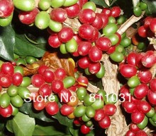 1 lb Green coffee beans China YUN NAN small coffee beans Free shipping