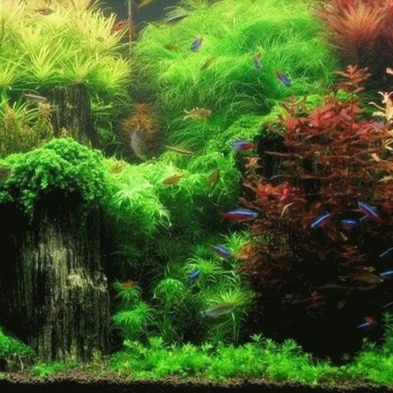 Mixed Water grass lawn aquarium fish aquarium decorative landscaping new turf seed plants aquarium seeds - 200 pcs / lot(China (Mainland))