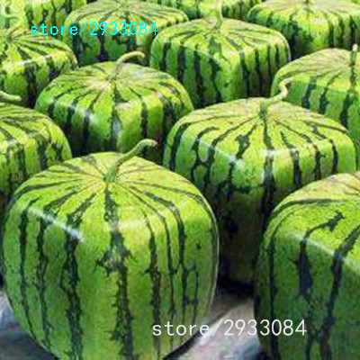 A Package 50 Pieces Seeds Rare Simple Geometric Square Watermelons Seeds Delicious Chinese Fruit Water Melon Seeds Home Garden(China (Mainland))