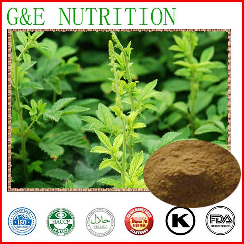 Hairyvein Agrimonia Herb and Bud Extract 1000g