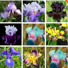 Sale! Free Shipping , Hot Selling ,100 Pink Iris Seeds, Popular Perennial Garden Flower, Gorgeous Cut Flower
