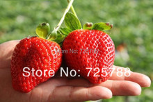 Super big strawberries seeds garden supply, perfume bonsai home & garden,home decor(China (Mainland))