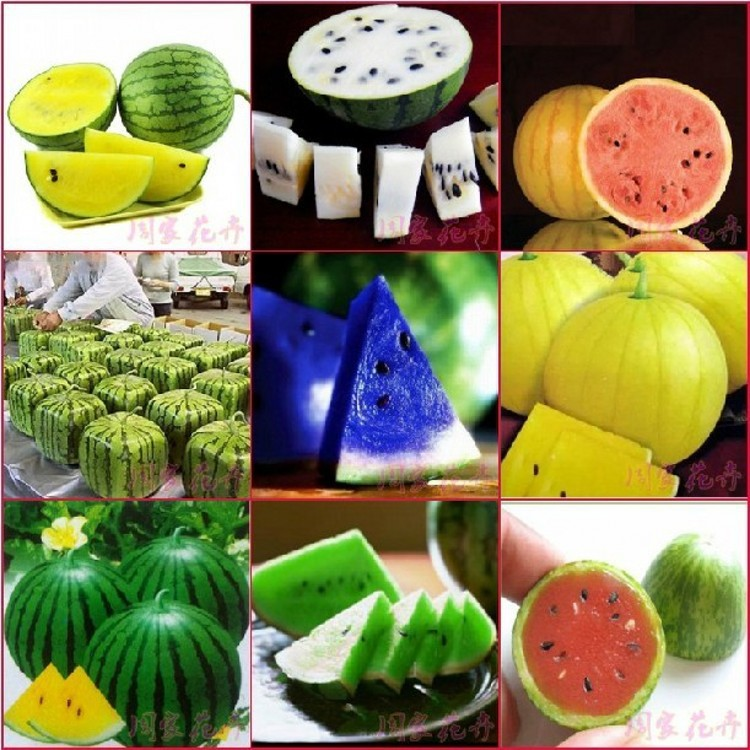 150pcs Very Sweet Watermelon Seed fruit seeds for Patio/balcony garden planting red/yellow/white/blue(China (Mainland))