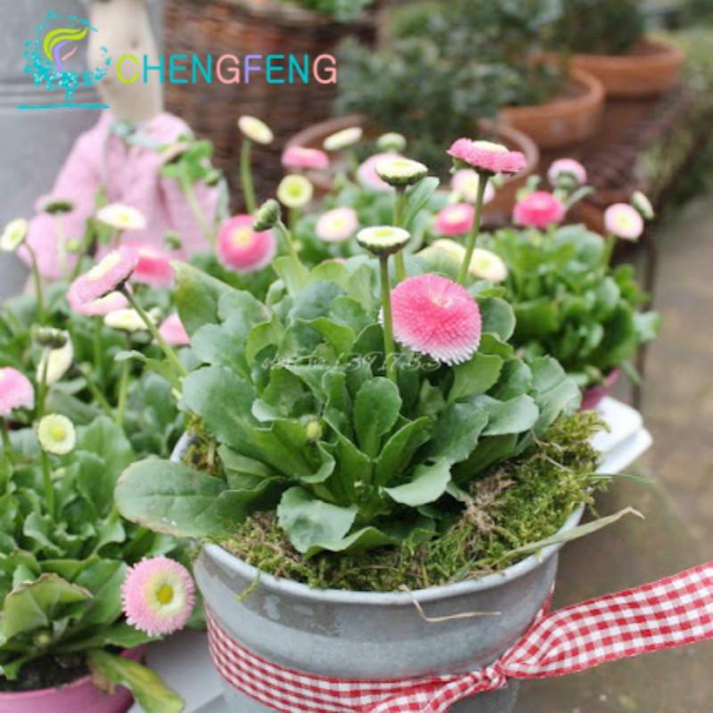 fleur plante vente promotion achetez des fleur plante