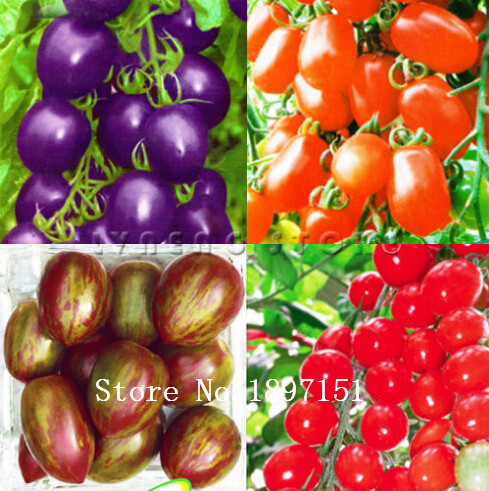 how to get tomato seeds from fruit