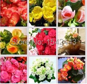 цены на Карликовое дерево Leean 100 tuberhybrida DIY 4 flower seeds в интернет-магазинах