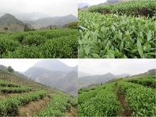 2015 China Famous Oolong Tea green food Wholesale loose Fragrance perfumes Tie Kuanyin tea orginal perfumes