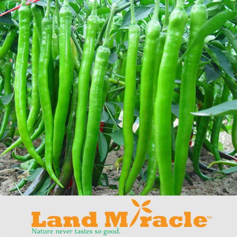 1 Original Pack, 30 seeds / pack, Long Green Cayenne Seeds Supper Hot Pepper Seeds Hot Green Chili Seeds Land Miracle D267(China (Mainland))