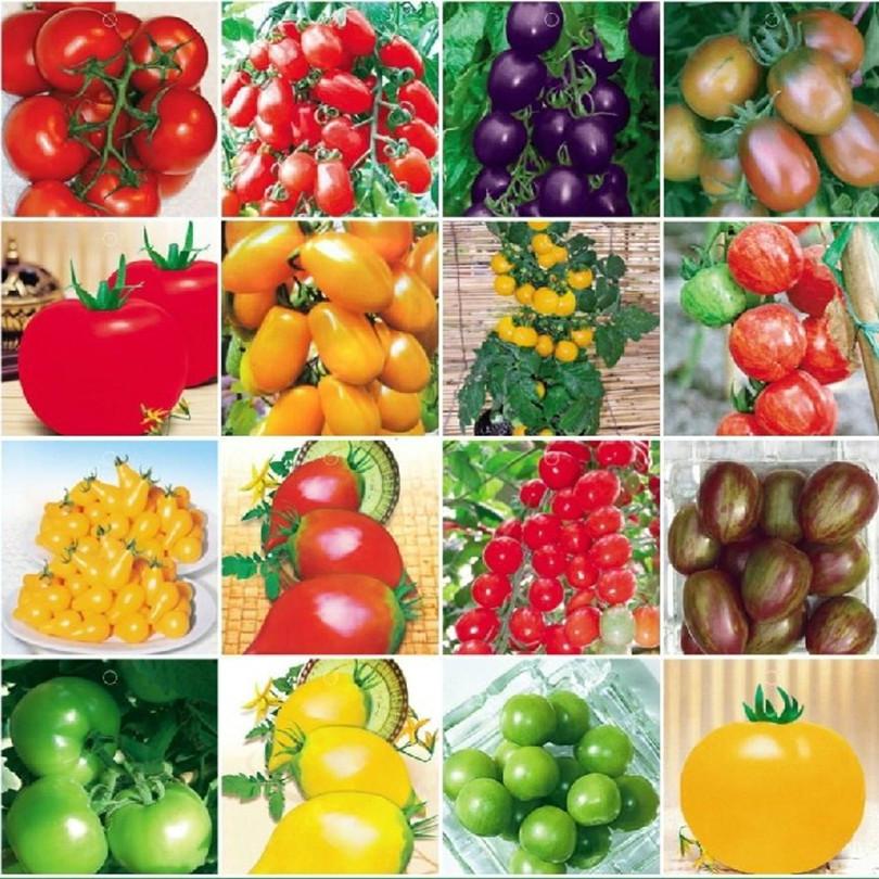 Vegetables fruit seeds Dwarf tomato Many kinds hybrid Bonsai plants Seeds home & garden 200 - Flowers Goddess store