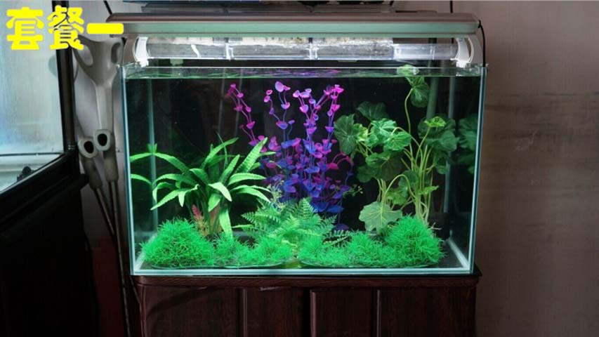 Decorating indoor plants picture more detailed picture for Aquarium decoration set