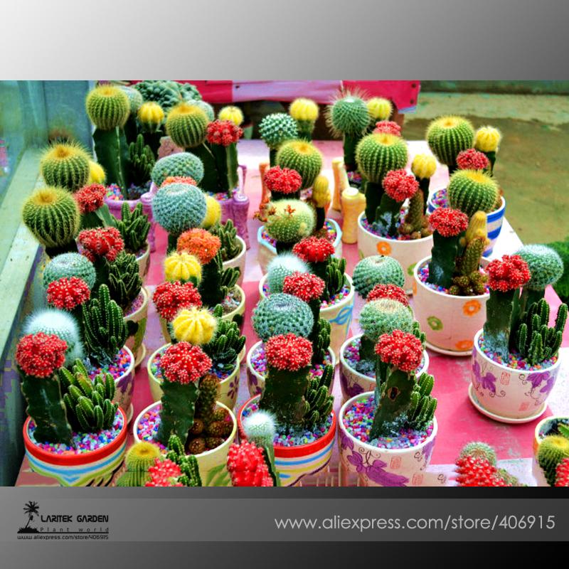 Achetez en gros mini pots de cactus en ligne des for Suculentas por mayor