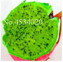 100 шт. 100% натуральная дракон фрукты бонсай белый и красный Pitaya seedsplants для дома и сада без ГМО фруктовых деревьев бонсай или растения в горшках(China)