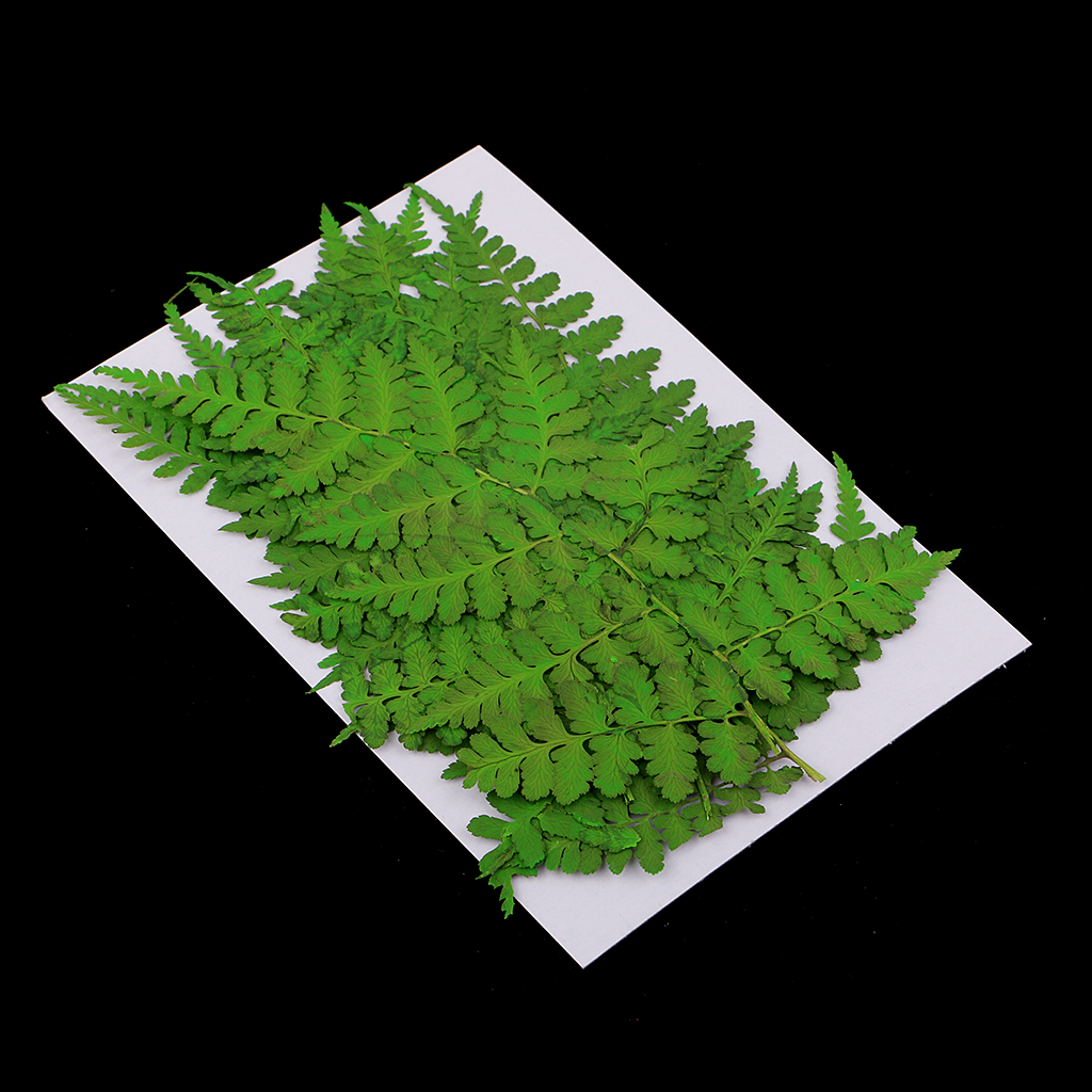 12 Pack Pressed Leaves Natural Dried Flowers For Scrapbooking Card Making packaging materials art glass craft accessories