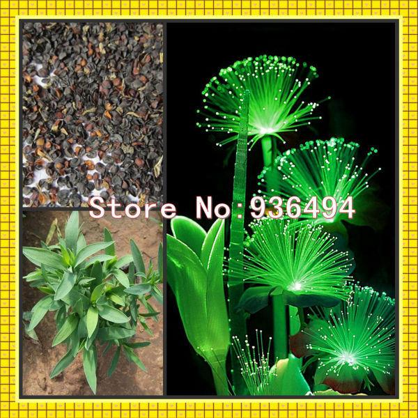 , 100 PC Germany rare green fluorescent flower seeds, plants, high-grade bonsai - Real Seeds store
