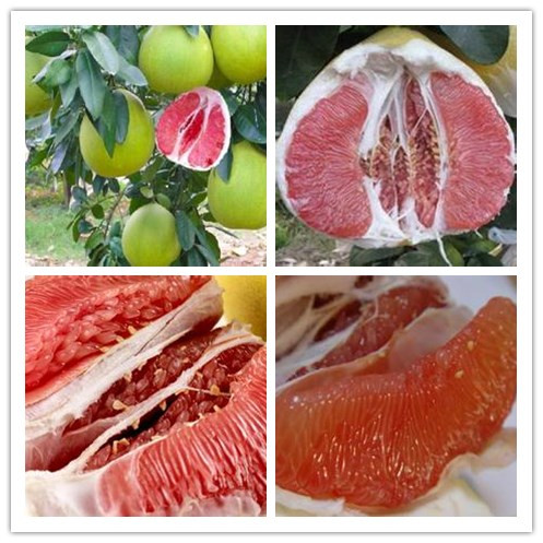 30seeds/bag Juicy grapefruit seed heart more meat, red meat, invited guests of the fruit(China (Mainland))