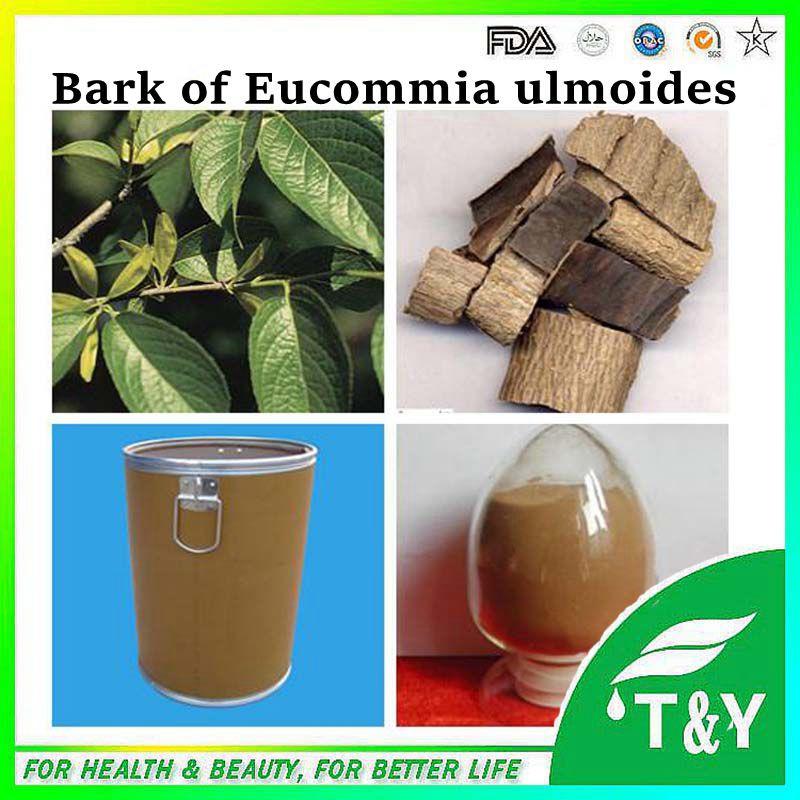 Eucommia Ulmoides extract 10:1 / Eucommia Ulmoides Oliver P.E. / cortex eucommiae