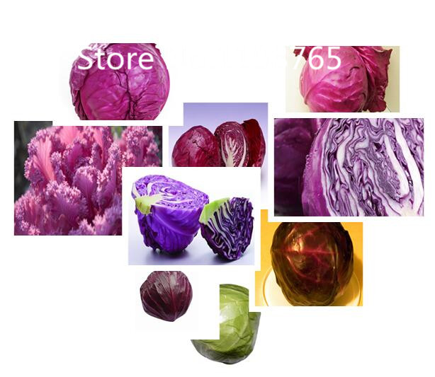 Special Price Promotion! 500 Purple Cabbage Seeds 10 kinds mixed packed, Vegetable Seeds High Germination DIY Garden Perennial B(China (Mainland))