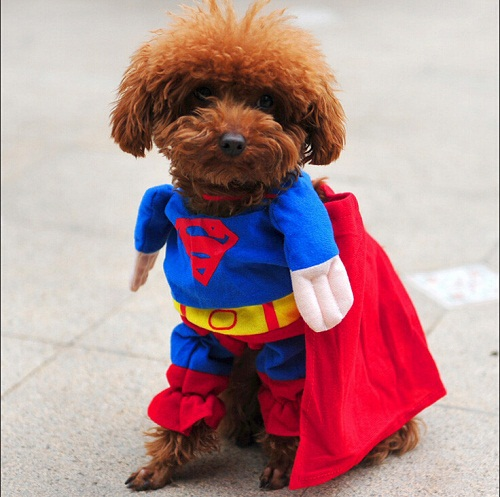 Pet Dog Puppy Cotton Superman Clothes , Halloween Apparel Costumes Outfit Suit Cat Dog Clothing 1pcs/lot Free Shipping(China (Mainland))