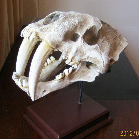 Resin mask high artificial saber-toothed tiger model