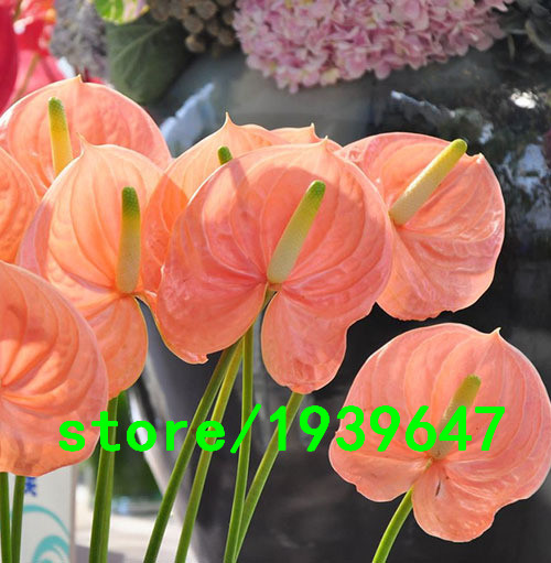 Online Buy Wholesale Pink Anthurium From China Pink