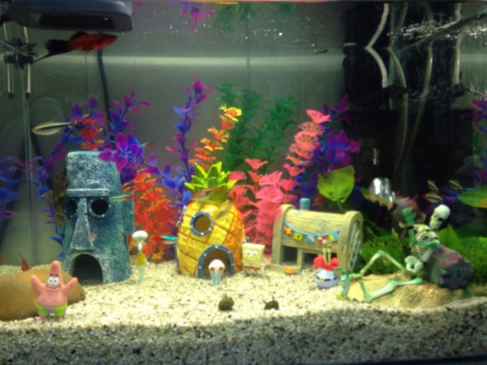 fish tank decorations the image kid has it