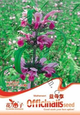 1 Original Pack 50 Seeds / Pack Motherwort seeds, medicinal herb seeds chinese vegetable seed(China (Mainland))