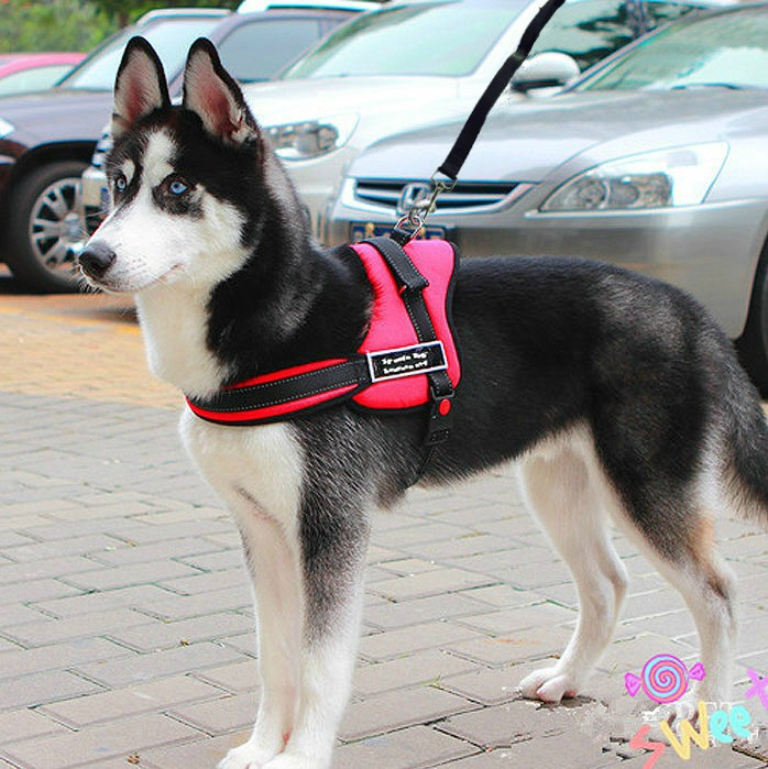 Free Shipping 2015BEST Sale New Pet Dog Leash Large dog harness with a dog leash dog chain explosion rushed leash Samoyed Husky(China (Mainland))