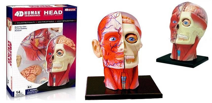 Buy 4D Human Organ Anatomy Heart Model Plastic Body ...
