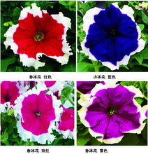 Buy 20 Colors Petunia seeds, Charming Petunia Flower seeds, Petunia potted seed, Bonsai balcony flower 200pcs/bag for $3.99 in AliExpress store