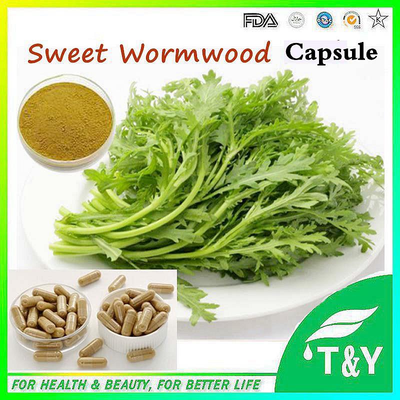 Sweet Wormwood extract / Wormwood Leaf Extract Capsule 500mg*800pcs