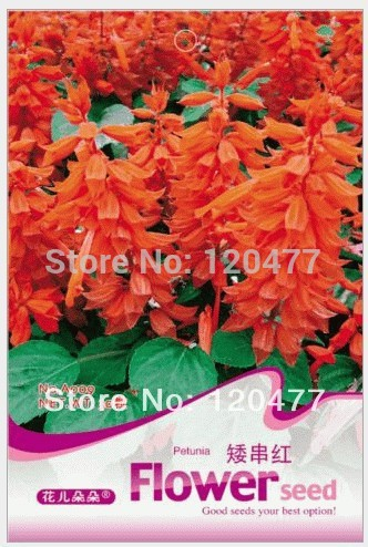 Flowers Red dwarf series,Red dwarf series seeds, Flowers seeds,about 30 particles(China (Mainland))