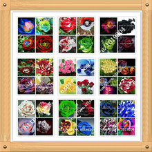 36 varieties of roses mixed seed, 200PC rare bonsai rainbow flower seeds, full color plant, A group of potted rose seeds(China (Mainland))