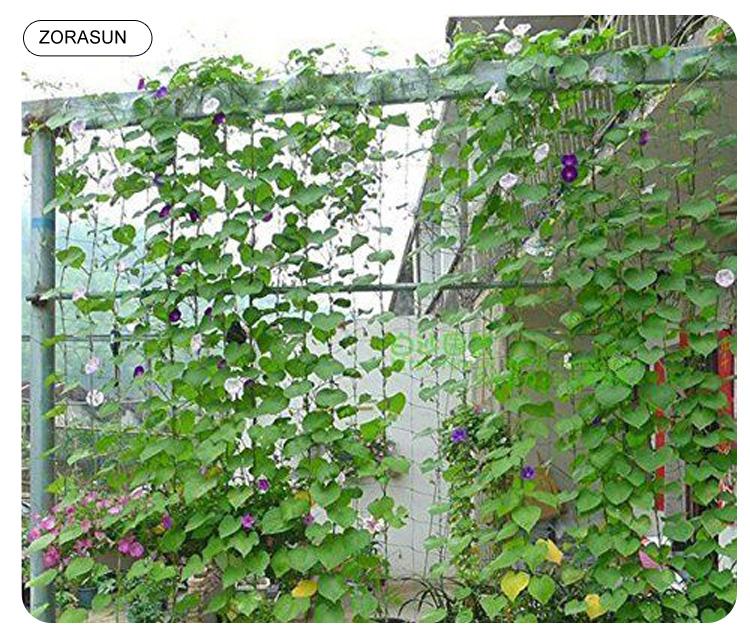 vegetable-net-7501