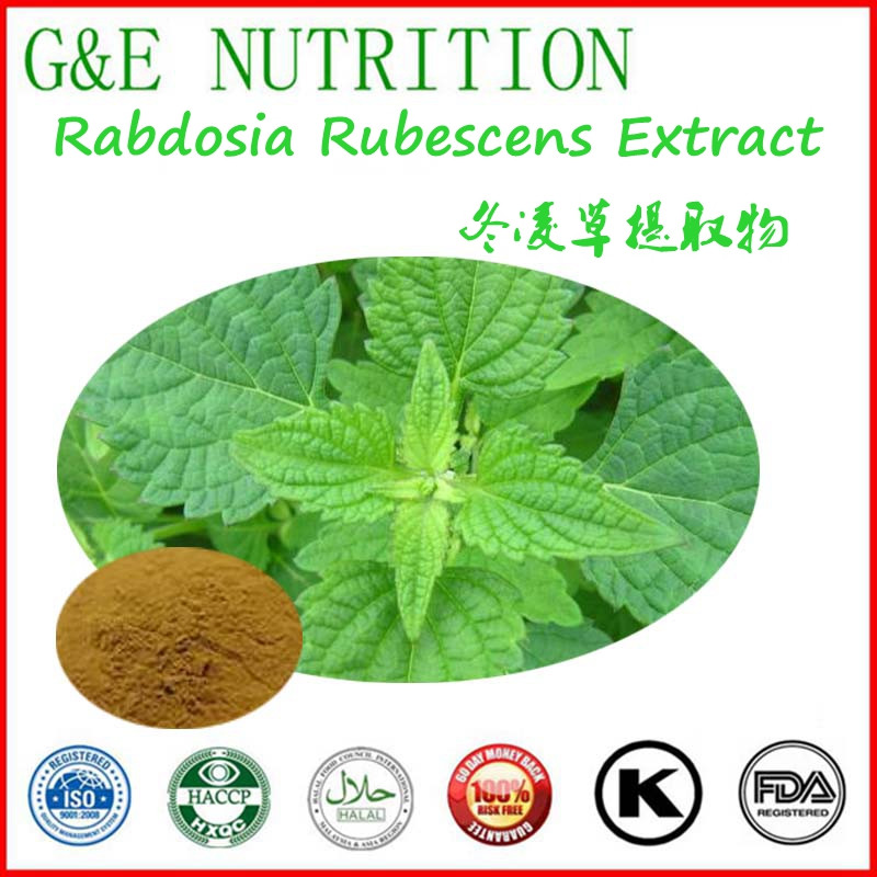 Natural anti-cancer product Rabdosia rubescens extract 1000g