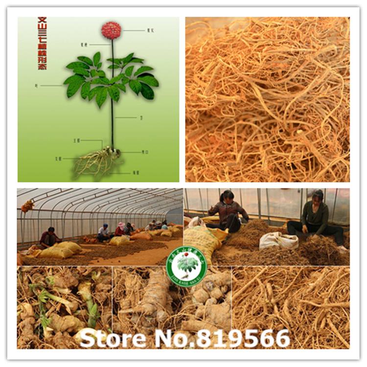 real Organic Panax notoginseng root Hairs 100g Chinese Yunnan Herbal Tea Detoxification Care tianqi sanqi Direct Selling<br><br>Aliexpress