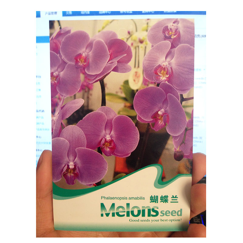 Phalaenopsis seeds Orchids seeds Professional packaging manufacturer(China (Mainland))