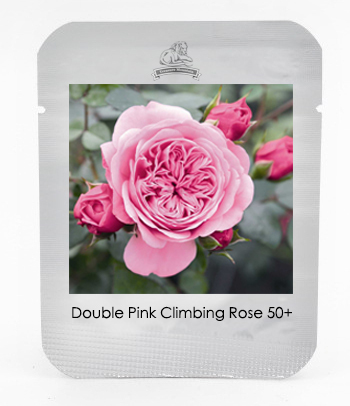 1 Professional Pack, 50 seeds / pack, New 'Starlet' Double Pink Climbing Rose Seed, Fragrant Flowers #NF495(China (Mainland))