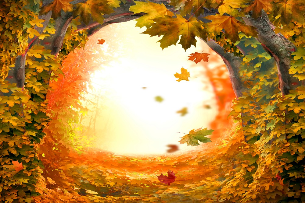 send rolled ! 12' x8' Orange Tree Hole Backdrop - fall, autumn, wedding, romantic - Printed Fabric Photography Background G0016
