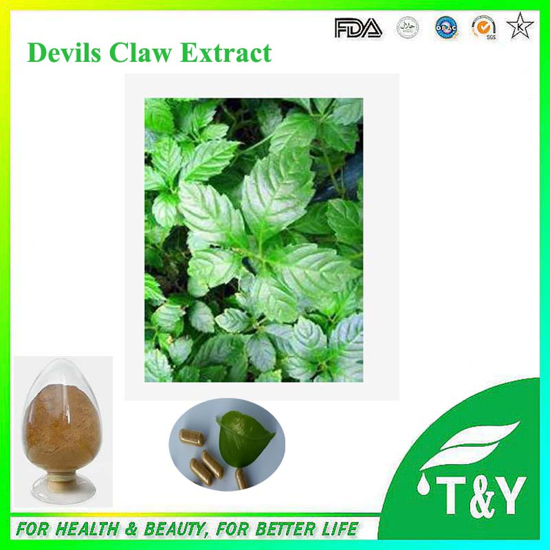 600g Best price Devils Claw Extract Powder with free shipping(China (Mainland))