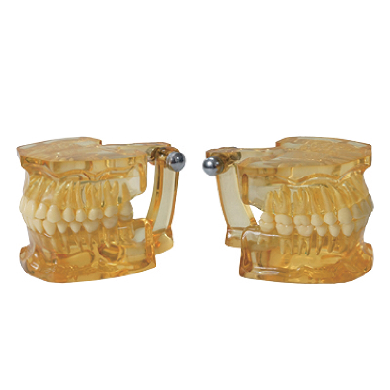 Tooth Teaching Giant Dental Dentist Teeth Child Kidtraining model Extractions of Medical Clear Extraction Model<br><br>Aliexpress