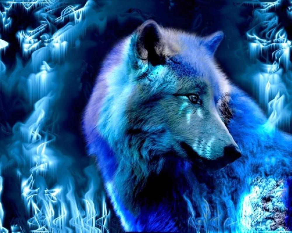 hewanpeliharaan2016 gambar serigala images
