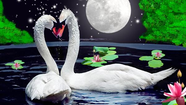5D Diamond embroidery animal diamond cross stitch Rubik's cube diamond painting diy diamond painting swans(China (Mainland))