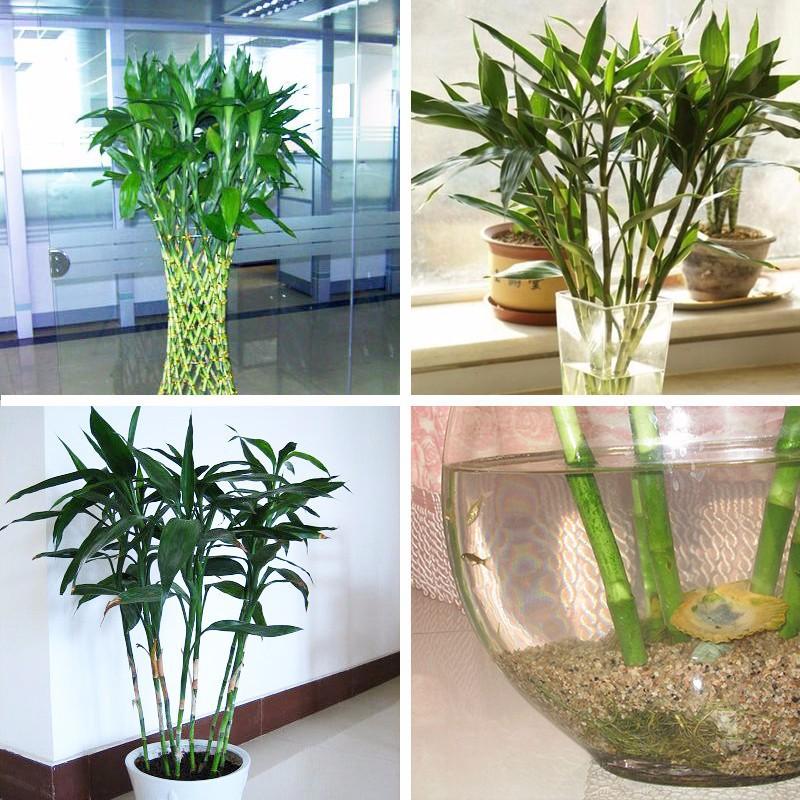 bambou pot promotion achetez des bambou pot promotionnels sur alibaba group. Black Bedroom Furniture Sets. Home Design Ideas