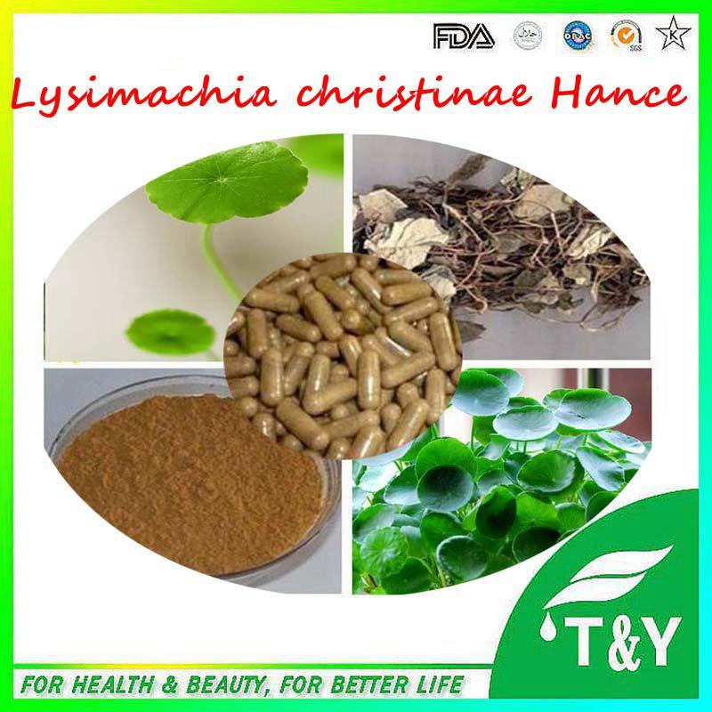Lysimachia christinae Hance extract; Herba Lysimachiae Capsule 500mg*300pcs