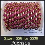 Fuchsia xz009