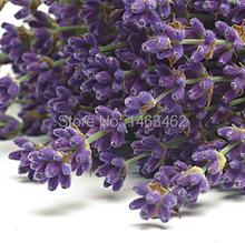 20g Lavender flower tea herbal tea scented tea dried lavender flower tea Free Shipping
