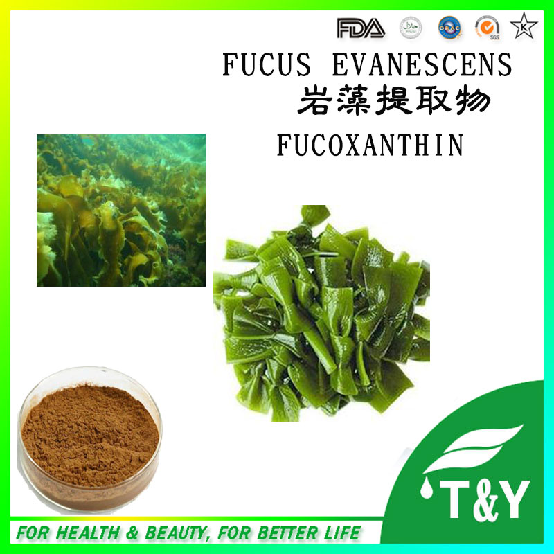 Anti-cancer Top Fucoxanthin from Seaweed Extract/kelps 500g/lot